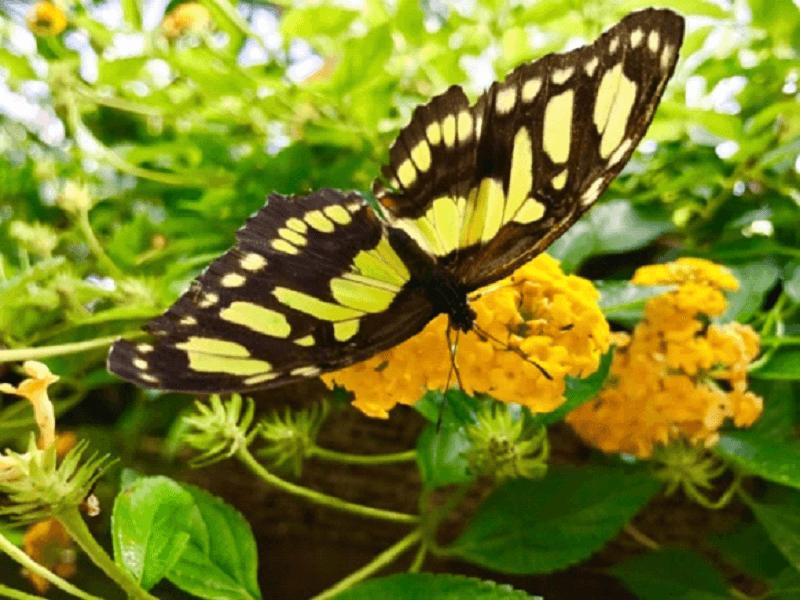 Motýlia záhrada